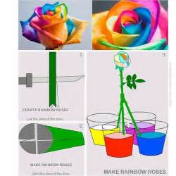 how to make different colors with food coloring 25 best ideas about rainbow roses on rainbow