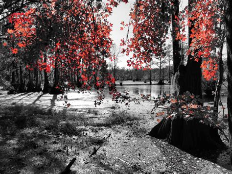 color accent merchants millpond the other side the water witch s