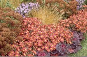 lilly s landscapes when to plant mums