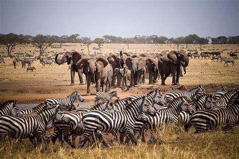 Albwardy Investment   Melia Serengeti