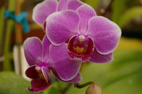 Segiempat Floral Sp 01 floral formula of family orchidaceae typesofflower