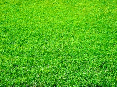 Green Grass by Bright Green Grass Great As A Background Stock Photo