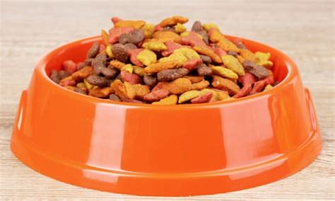 7 Things To Consider When Picking Pet Food by 10 Things To Consider When Choosing Cat Food
