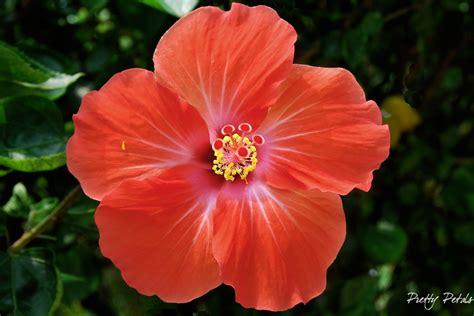 wallpaper bunga raya oh lala land tulip menari nari depan mata