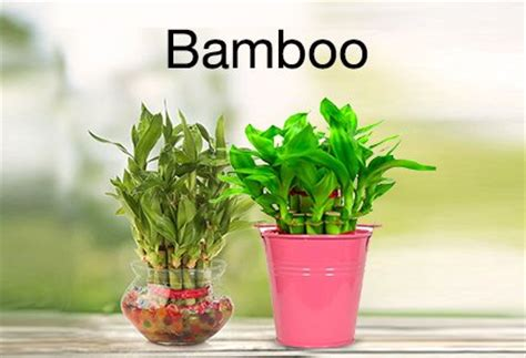 biggest online plants store plants store buy plants online at best prices in india