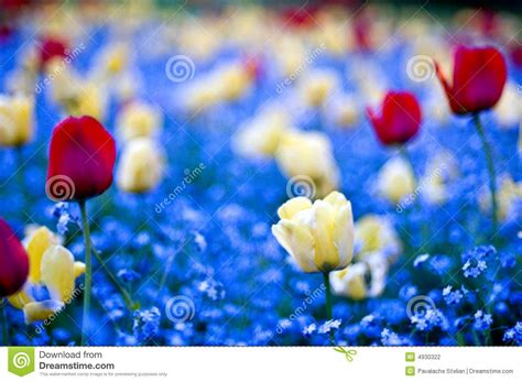 win with flower garden win flowers stock photography image 4930322
