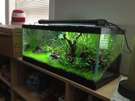 Fan Diy Aquascape Tank 30 70 Aquarium 30 Gallon Aquarium Ideas