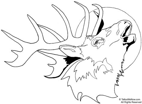 free deer head colring pages coloring pages