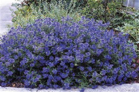 25 best ideas about low maintenance shrubs on pinterest low maintenance plants low