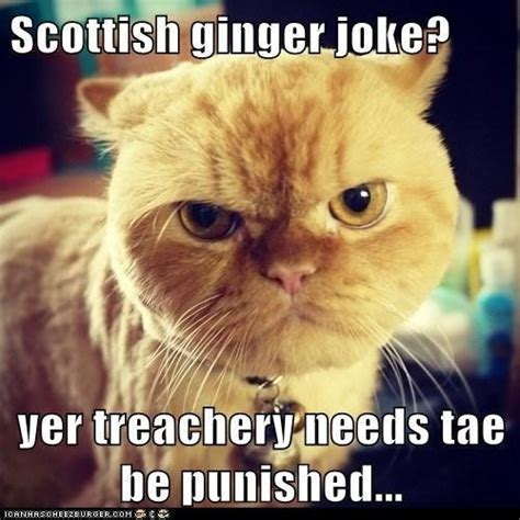 Scottish Memes - scottish ginger cat memes pinterest cats and ginger cats
