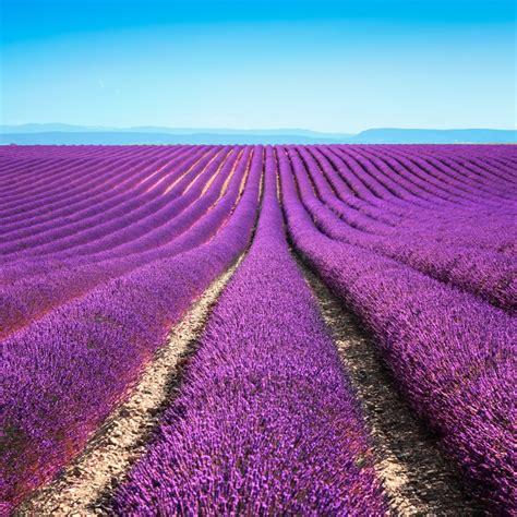 Lavendelfelder Provence by Landschaften Der Provence Der C 244 Te D Azur Provence Info De