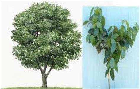 Bubuk Kayu Manis 330 Gram berbagai manfaat dan khasiat kayu manis norra pissa