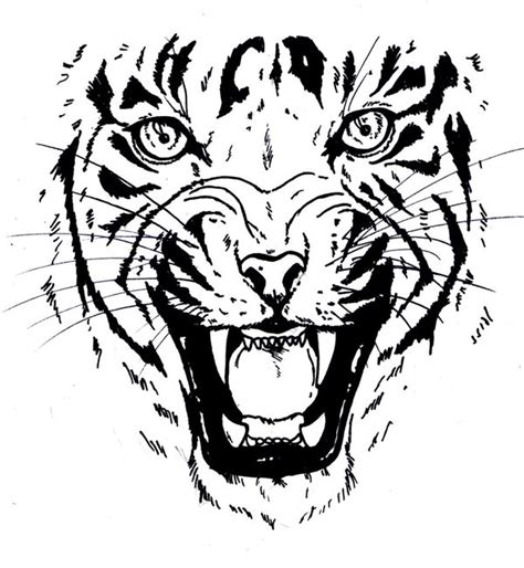tiger face stencil cliparts co
