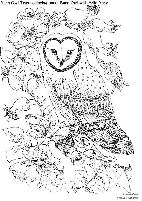 intricate coloring pages for adults the barn owl trust