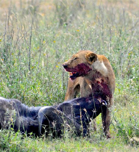 Prey Of The Predator cracking the code of predator prey relations one at a