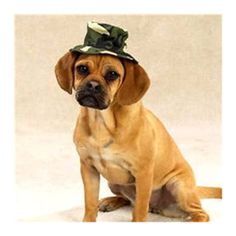 rs for dogs zorba designer hat for dogs buy pet supplies toys clothes shoes raincoat