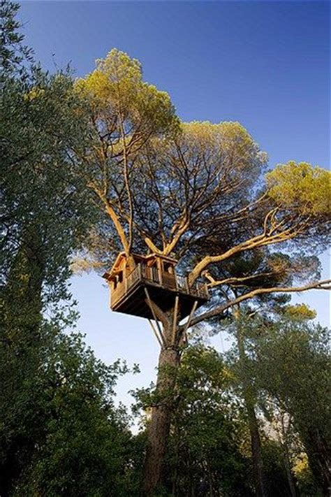 nice tree houses nice france pine and tree houses on pinterest