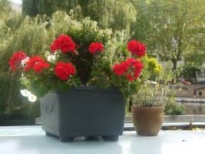 flower pots design trendy mods