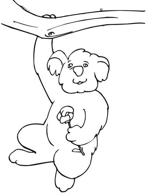 koalas coloring page free printable koala coloring pages for kids