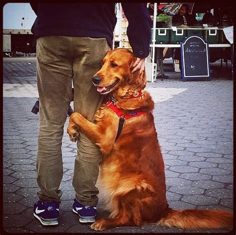 louboutin golden retriever golden retriever hugging and holding with human in
