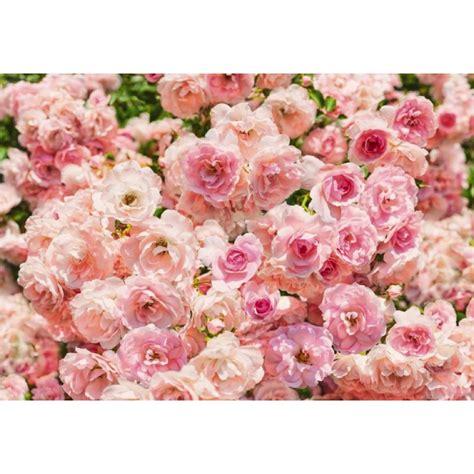 fiori rosa poster fiori rosa