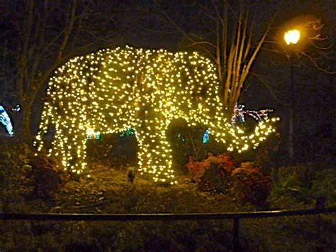 My Top Ten Favorite Things About Living In Washington Dc Zoo Lights Dc