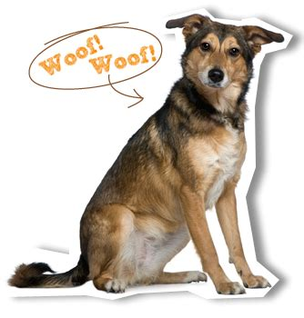 woof woof puppies city farmers pet supplies for dogs