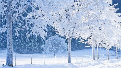 frozen winter wallpaper frozen forest wallpaper winter hd desktop wallpapers 4k hd