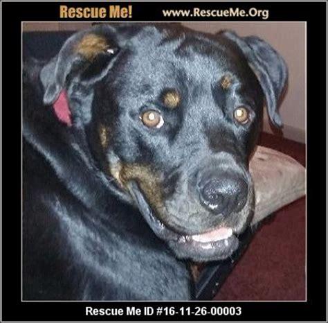 rottweiler mn minnesota rottweiler rescue adoptions rescueme org