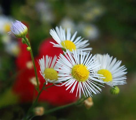 fiori in terrazza fiori di co in terrazza foto immagini piante