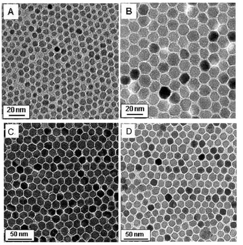 B I O Stemcell Gold superparamagnetic iron oxide nanoparticles as mri contrast