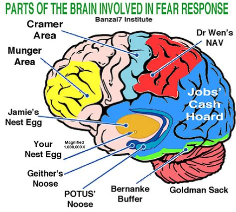 3 sections of the brain parts of the brain involved in fear response