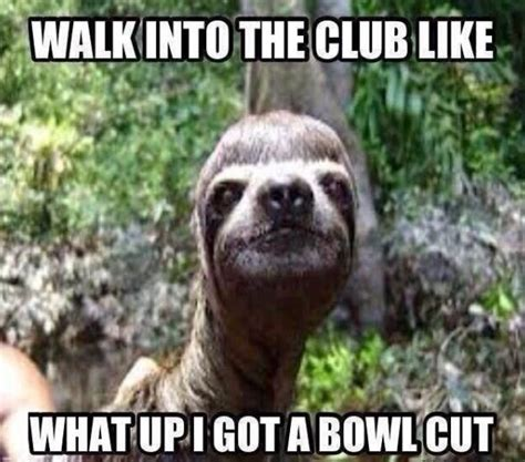 Sloth Meme Generator - 85 best sloth images on pinterest