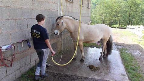 pferde stall pferde stall fried st germannshof dahner felsenland tag