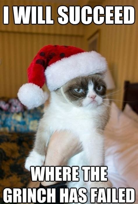 Best Grumpy Cat Meme - top 25 grumpy cat memes cattime