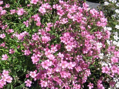 pink flower ground cover round designs