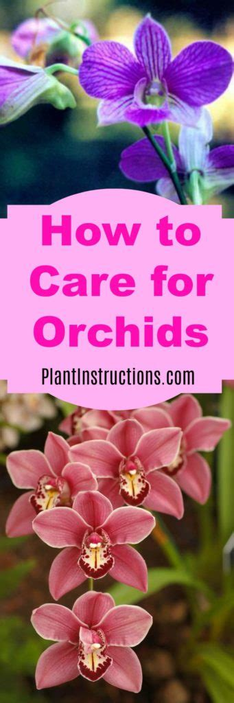 how to care for orchids plant instructions