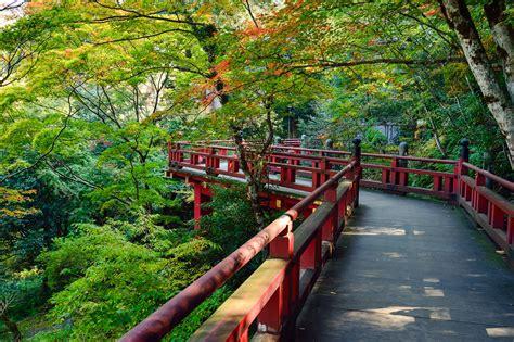 wallpaper pemandangan alam jepang gambar pemandangan pohon menanam kayu jembatan daun