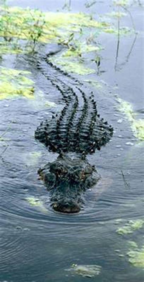 tpwd     alligator