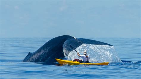 Syafira Blue by Blue Whale Holidays Expeditions World