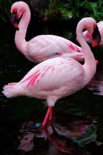 Pink Flamingos Images Amp Pictures Becuo