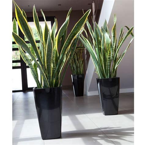 vasi esterno design vasi esterno design vasi da giardino scegliere tra i