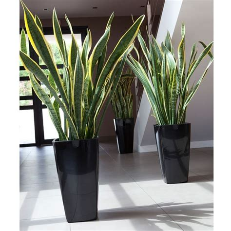 vasi giardino design vasi esterno design vasi da giardino scegliere tra i