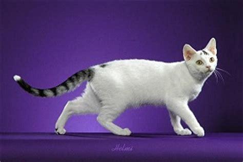 van pattern cat definition cat colors quot with white quot