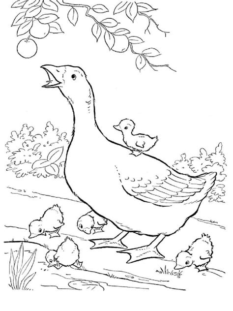 baby goose coloring pages baby goose coloring page az coloring pages