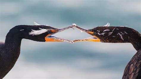 top 100 birding sites of the world ebook 2015 audubon photography awards top 100 audubon
