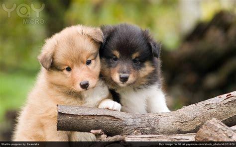 free puppy stuff pups gratis newhairstylesformen2014