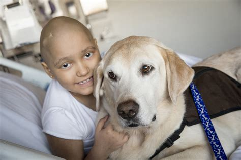 dogs with cancer finding a cure for and dogs with cancer
