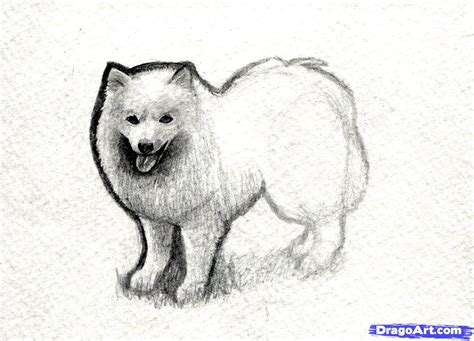 a real puppy dogs drawings in pencil for www pixshark images galleries with a bite
