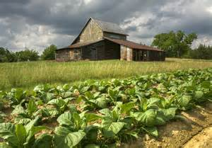 Tobacco Barn Nc Tobacco Barns Project C Ville Images